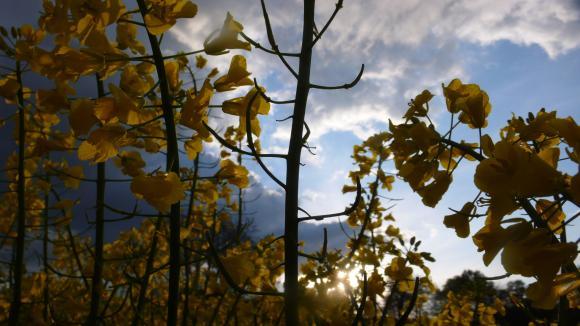 http://a-votre-guise.cowblog.fr/images/P1220217.jpg
